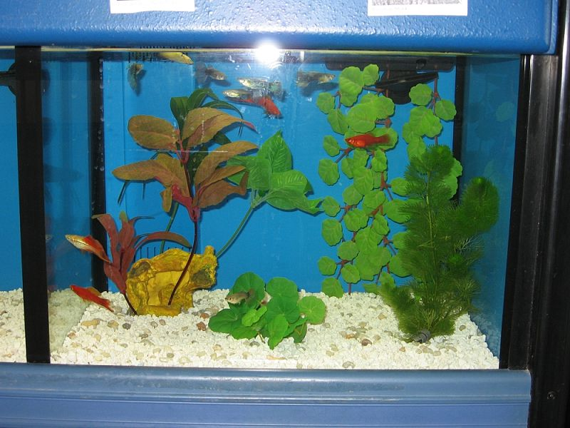 Pet Quarters Fish Water Covers Over Three Quarters Of
